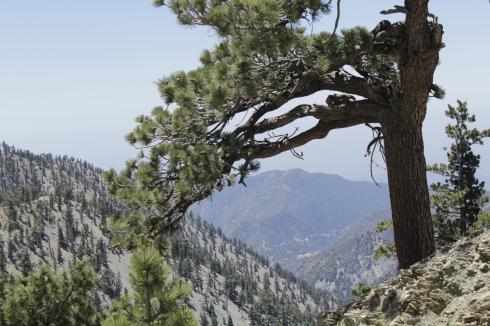 Hiking Mount Baldy in California. (Jenna Tenn-Yuk)