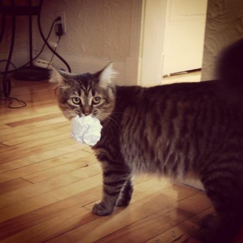 Paquita playing fetch. (Jenna Tenn-Yuk)